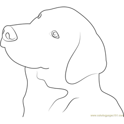 Great Swiss Mountain Dog Free Coloring Page for Kids