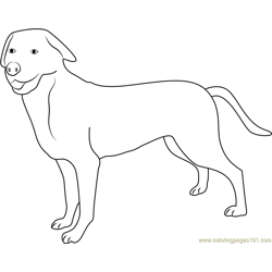 Greater Swiss Mountain Dog Free Coloring Page for Kids