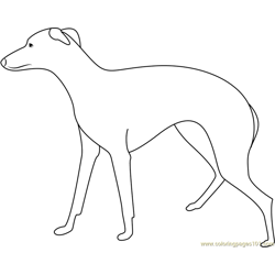 Greyhound Large Dog Free Coloring Page for Kids