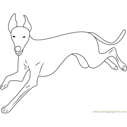 Italian Greyhound Running Free Coloring Page for Kids