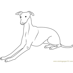 Italian Greyhound Free Coloring Page for Kids