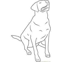 Labrador Retriever Free Coloring Page for Kids