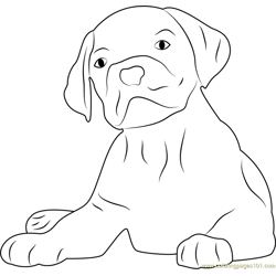 Lovely Dog Face Free Coloring Page for Kids