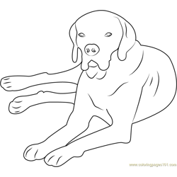 Portuguese Pointer Free Coloring Page for Kids