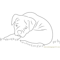 Sad Dog Free Coloring Page for Kids