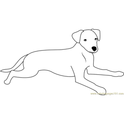 Slim Dog Free Coloring Page for Kids