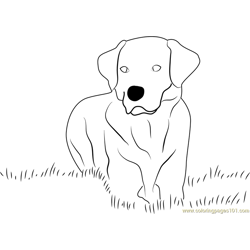 Yellow Labrador Retriever Free Coloring Page for Kids