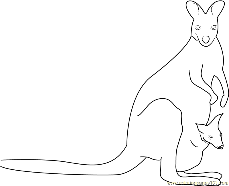 Awesome Kangaroo Coloring Page