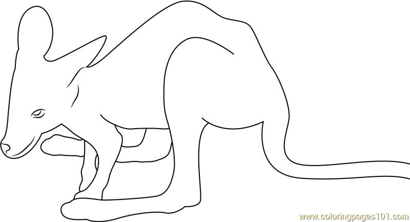 Baby Kangaroo Coloring Page - Free Kangaroo Coloring Pages ...