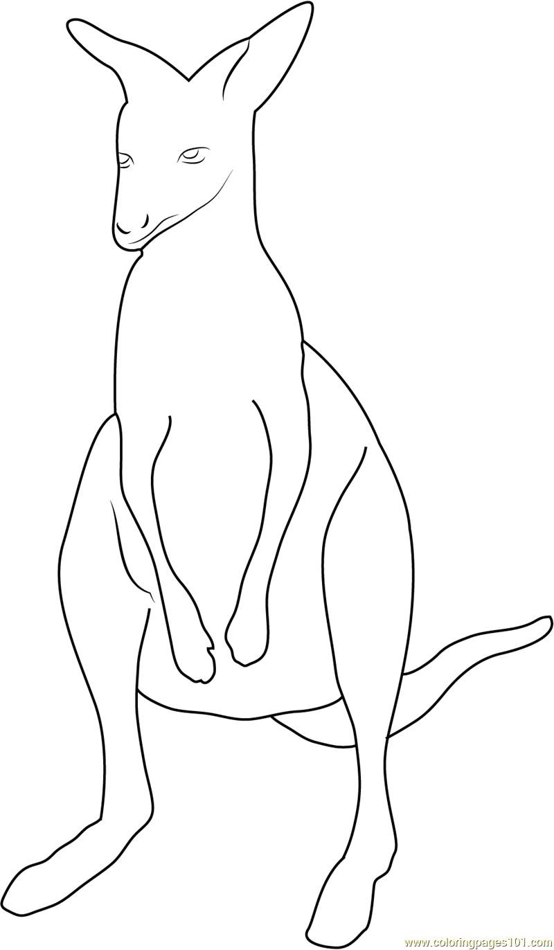 Kangaroo at up see Coloring Page - Free Kangaroo Coloring Pages ...
