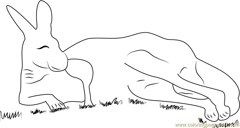 Red Kangaroo Coloring Page