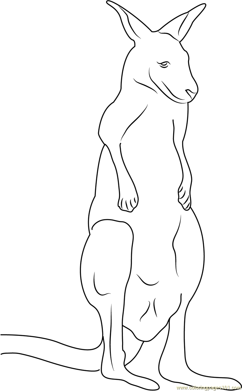 Red Up Kangaroo Coloring Page