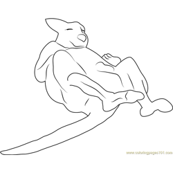 Kangaroo Laying
