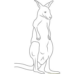 Red Up Kangaroo