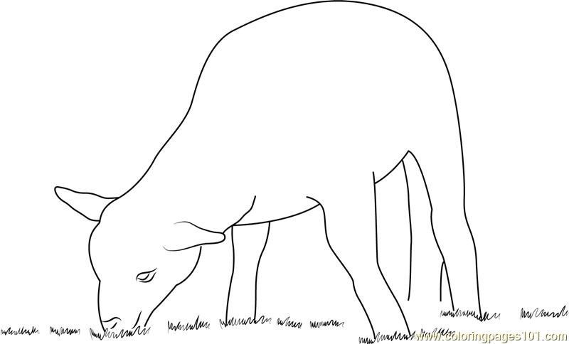 Lamb Eating Grass Coloring Page