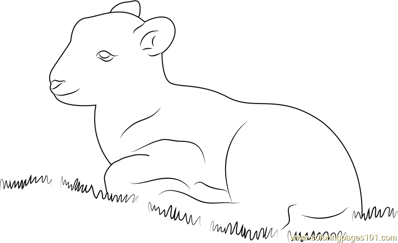 Lamb Sitting in Grass Coloring Page