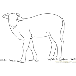 Lamb Look coloring page