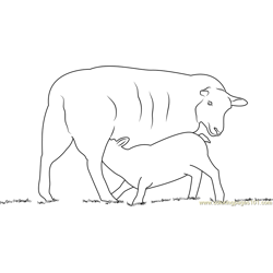 Lambs Feeding coloring page