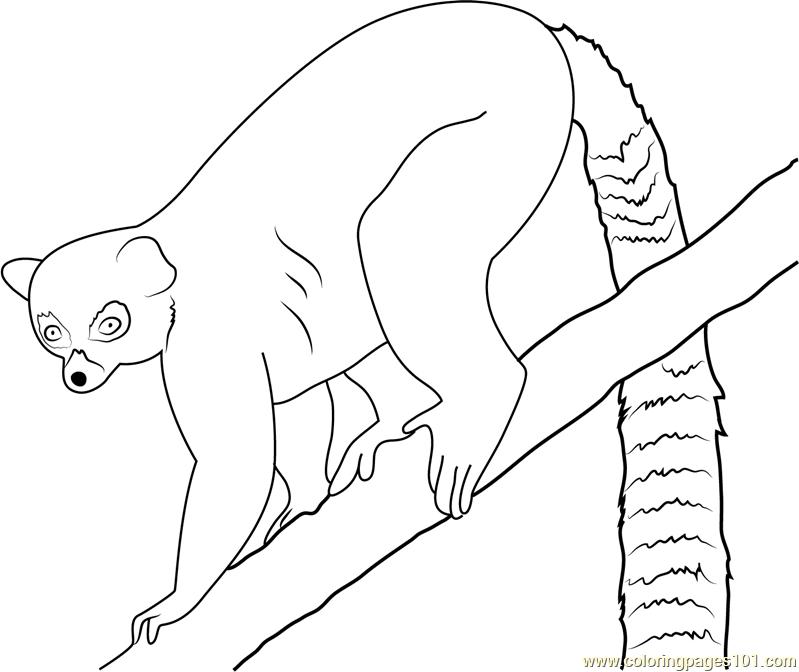 Lemur Coloring Page - Free Lemur Coloring Pages : ColoringPages101.com