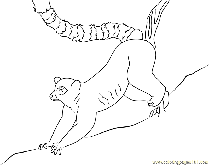 Ring Lemur Coloring Page - Free Lemur Coloring Pages ...