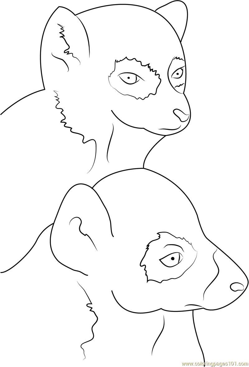 Ring tailed lemur coloring pictures bltidm for Ring tailed lemur coloring pages