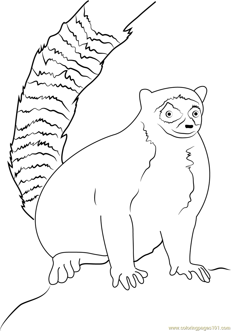 Ring Tailed Lemur Sitting on Rock Coloring Page