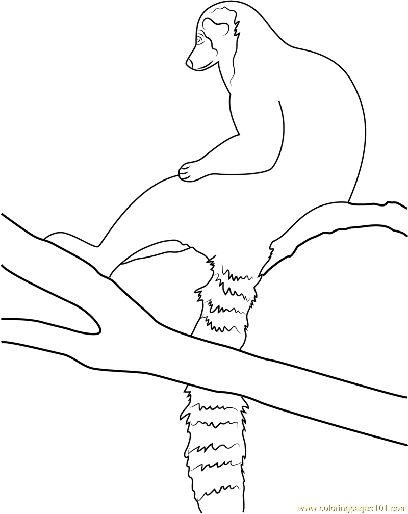 Old fashioned lemur coloring pages pattern model resume for Ring tailed lemur coloring pages