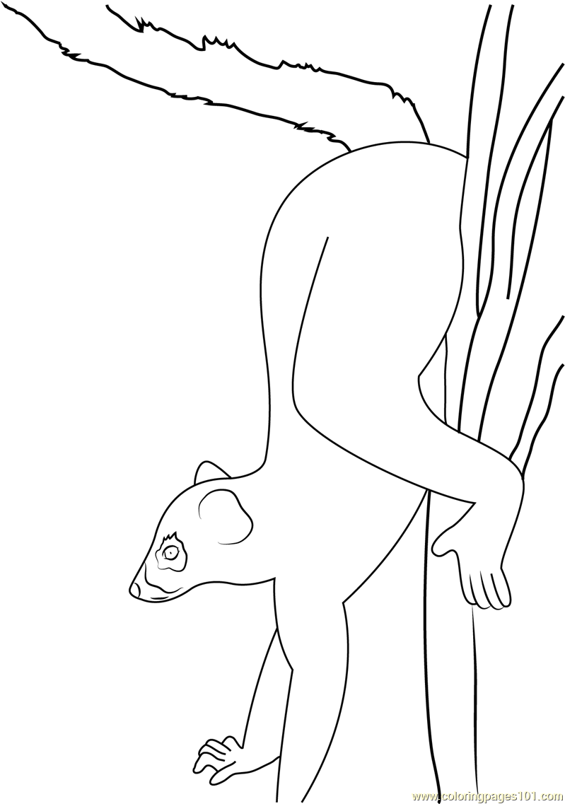 Ring Tails Isalo Coloring Page