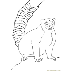 Ring Tailed Lemur Sitting on Rock Free Coloring Page for Kids