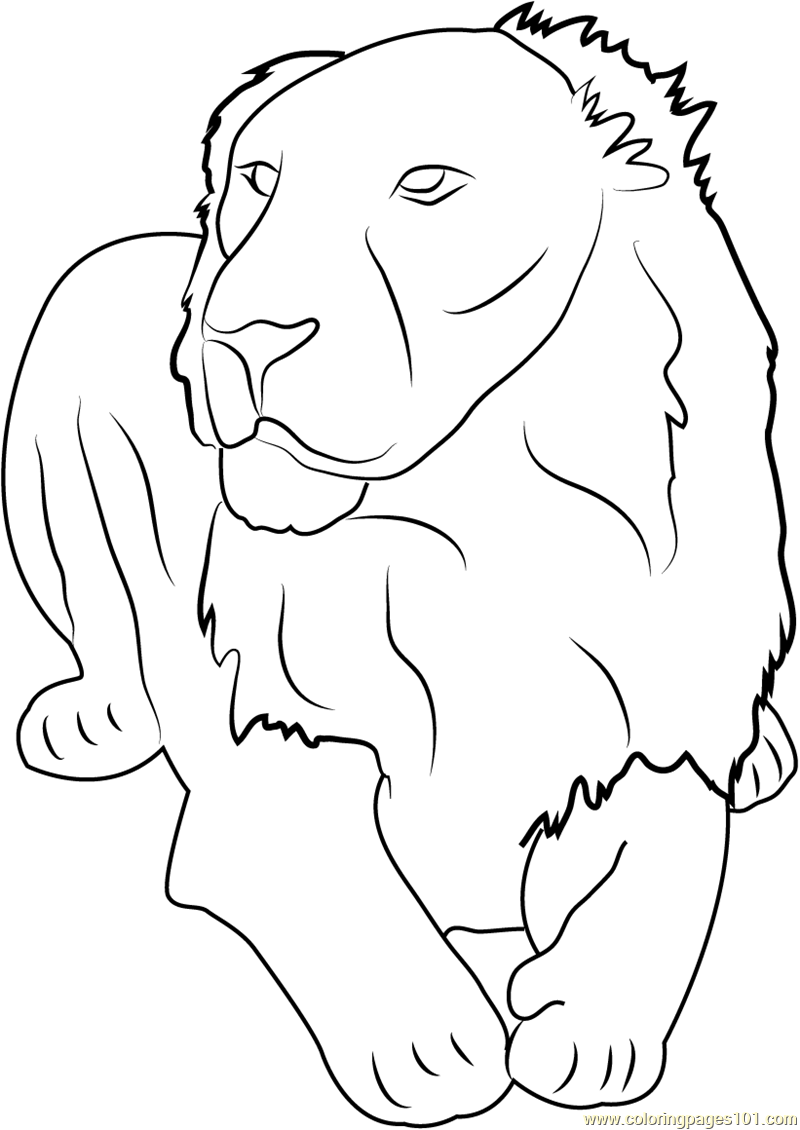 asiatic lion gir forest india coloring page
