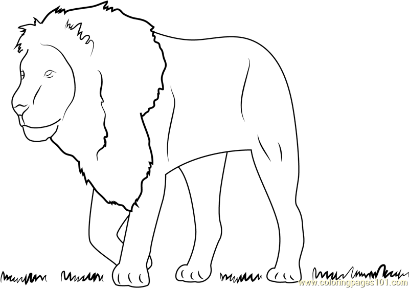 Lion See on Grass Coloring Page
