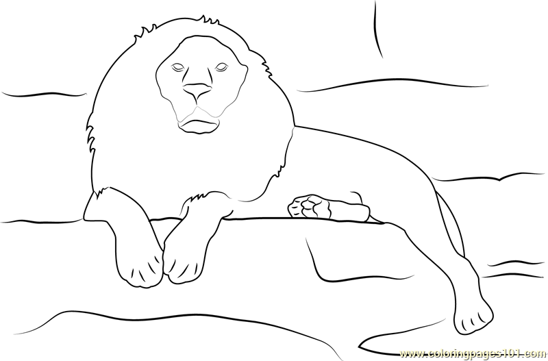Lion Sitting on Rocks Coloring Page