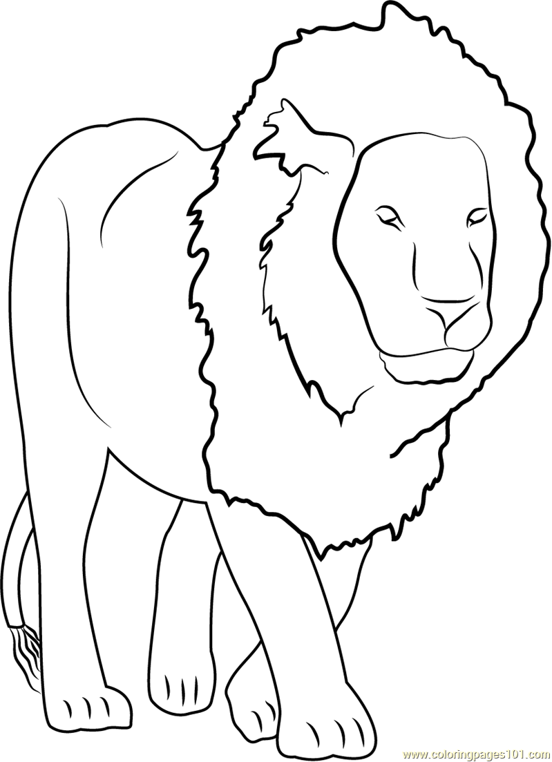 Lion Coloring Pages Pdf : Lion coloring page free pages