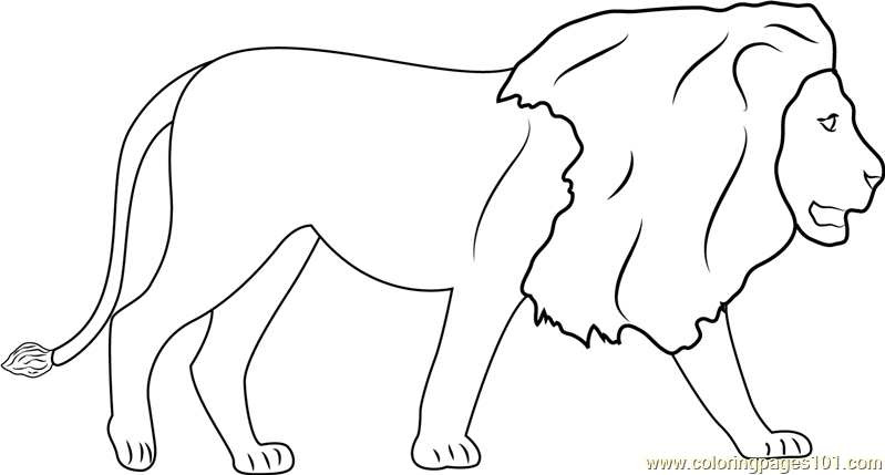 Lions Walking Coloring Page