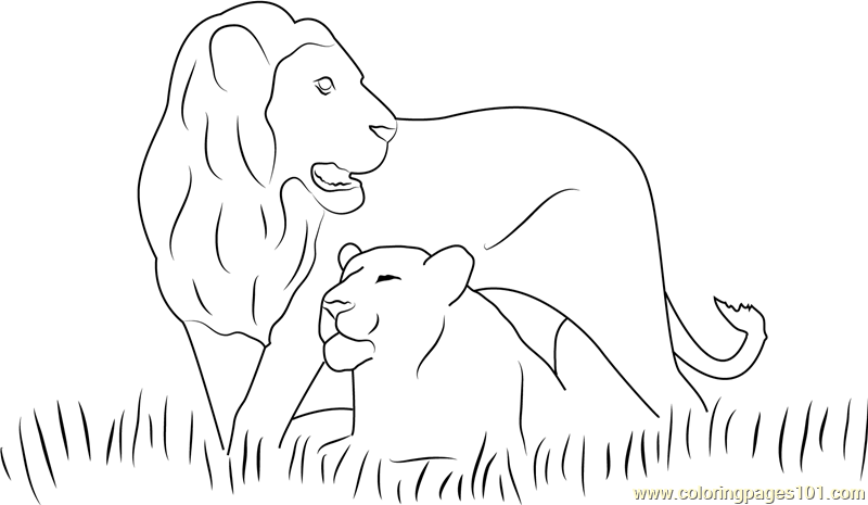 Two Lions Coloring Page Free Lion Coloring Pages