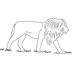 African Lion Free Coloring Page for Kids