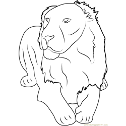 Asiatic Lion Gir Forest India Free Coloring Page for Kids