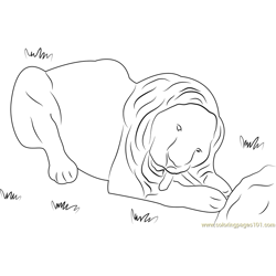 White Lion Free Coloring Page for Kids