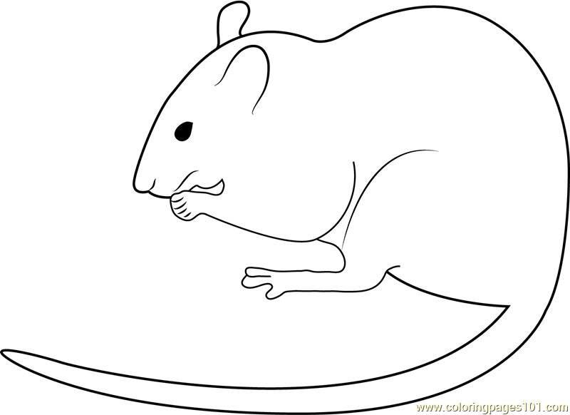 White Mouse Albino Rat Coloring Page Free Mouse Coloring