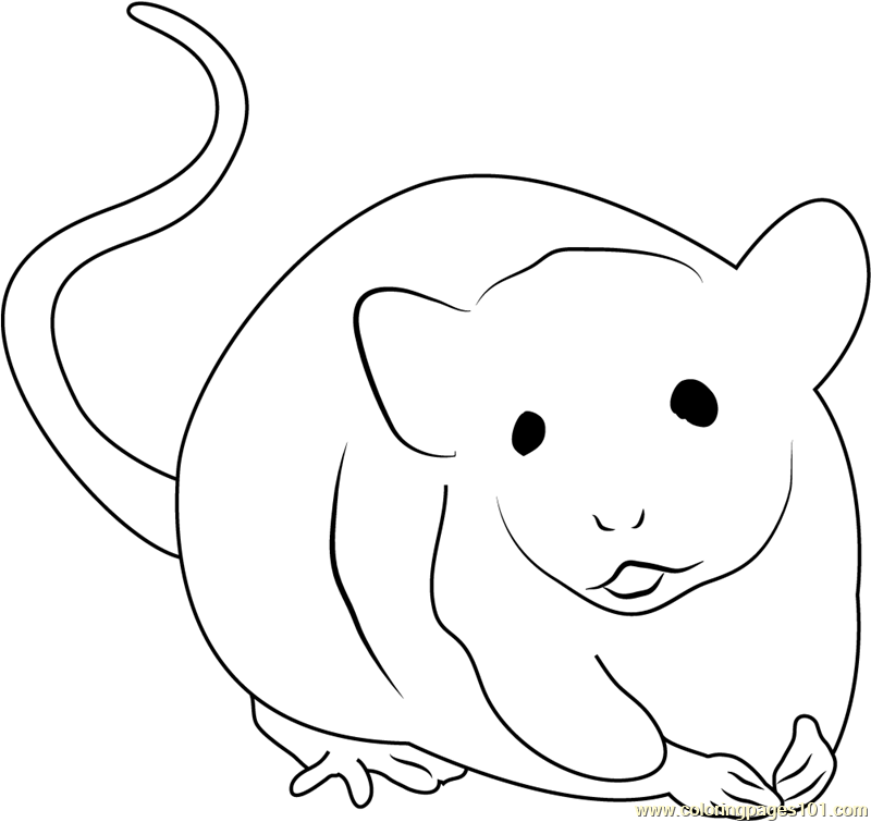 Wild Animals Mice Coloring Page