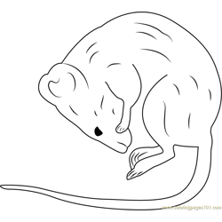 Another Taxidermy Sleeping Mouse Free Coloring Page for Kids