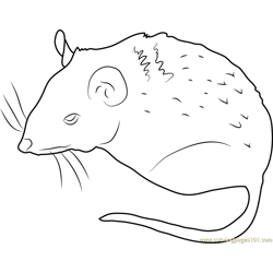 Peromyscus Mouse Free Coloring Page for Kids
