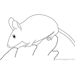 Spiny Mouse Free Coloring Page for Kids