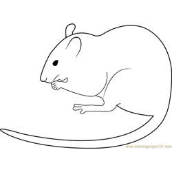 White Mouse Albino Rat Free Coloring Page for Kids