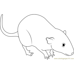 White Mouse Free Coloring Page for Kids