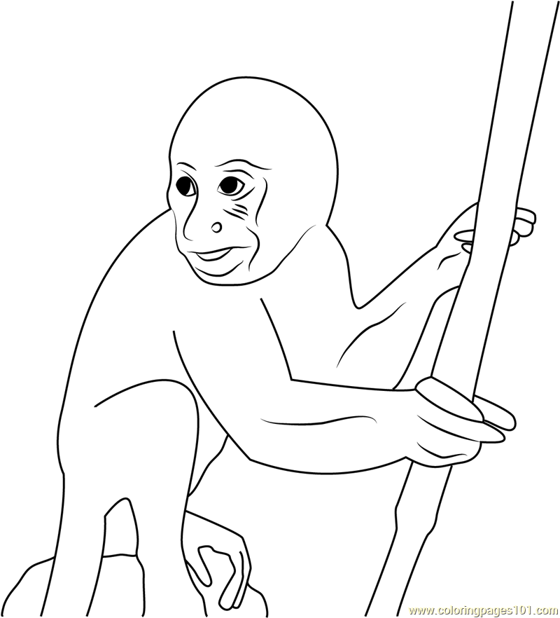 Amazon Monkey Coloring Page