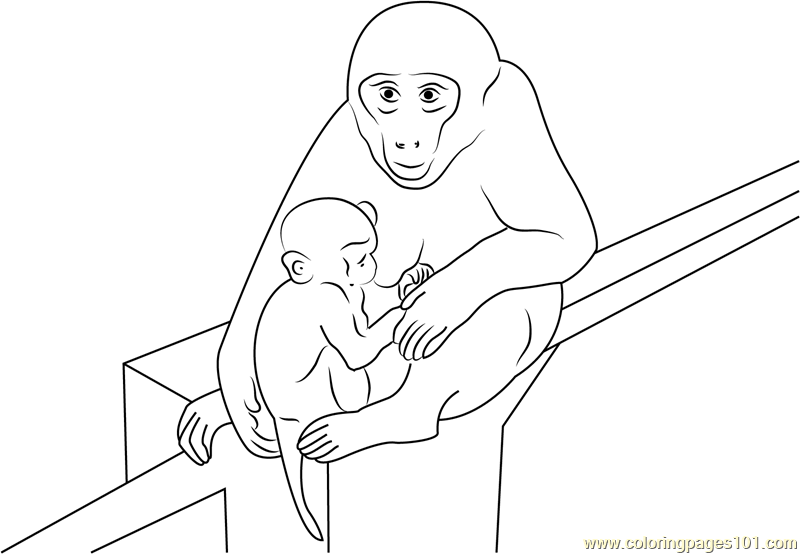 Baby Monkey With Mother Coloring Page
