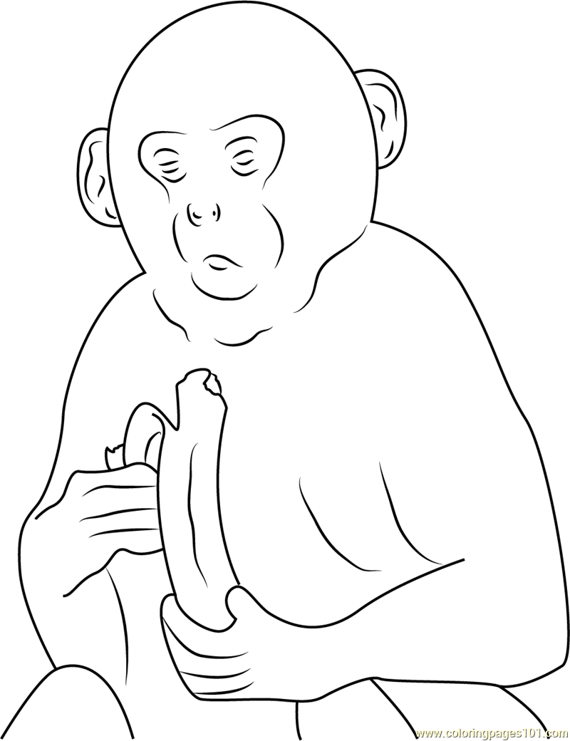Gray Langur Monkey Coloring Page
