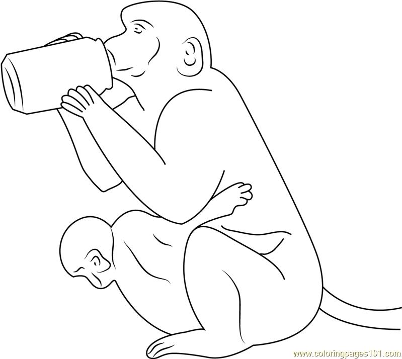 Monkey Drinking Water Coloring Page