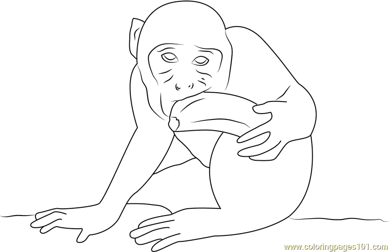 Monkey Eating Banana and Look Coloring Page